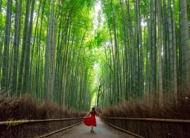 Impressive place for photography. A portrait in this amazing Bamboo Forest, Arashiyama, Kyoto, Japan.