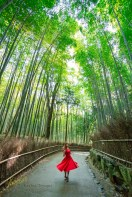 This is what happens when my beautiful muse decides to twirl in the Bamboo Forest, Arashiyama, Kyoto, Japan.