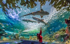 Tunnel passage with a view of the water tank, sharks and other fish in a magnificent display