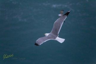 A seagulls view, Livorno Italy
