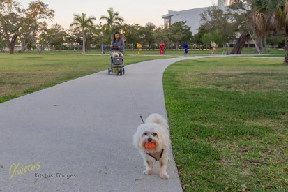 Doggy at the Museum Park