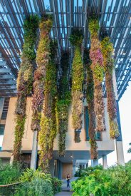 Vertical Gardens in Perez Art Museum