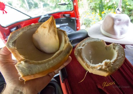 "After drinking the coconut water the next best thing to do is to eat the fresh coconut by opening it up and scooping it with a ""coconut spoon""! Delicious, healthy and highly environmental friendly"