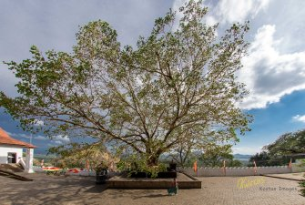 This tree was outside the cave temple. Captured by my fisheye lens, due to the huge size and close distance.