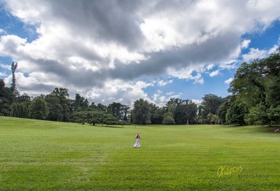 Botanic Gardens don't always mean flowers and congested spaces. Here is a huge open space ideal for my minimalist shot. Royal Botanic Gardens, Kandy, Sri Lanka
