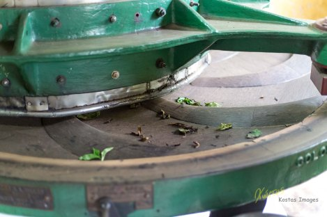 Traditional Tea Leaf Rolling Machine with wooden blades. Tea factory, Nuwara Eliya, Sri Lanka