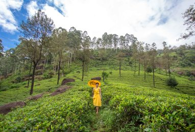 An excursion to a Tea Producing country can't be complete without a visit to the Tea Fields. The fragrance and the green color were overwhelming. Nuwara Eliya, Sri Lanka