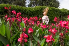 Hair flip in a sea of flowers. Gregory Park, Nuwara Eliya, Sri Lanka