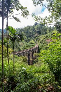 Train Brigde framed by the tropical forest in Sri Lanka. What a sight.