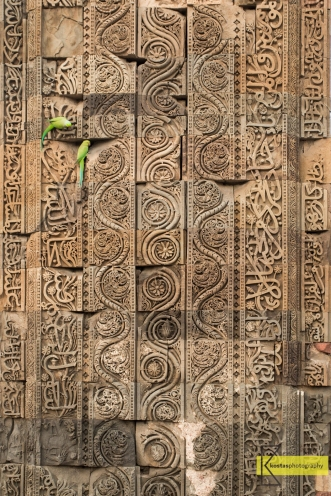 Parrots hanging out in the artistic walls of Qutub Minar site. Delhi, India.
