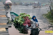 A lady is transferring vegetables on her boat on a cold morning for the Vegetable Floating Market. It was a bit cold (around 6 celsius) but totally worth it. You don't see many women in this market, I consider myself lucky! Kashmir, India.