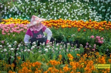 Florists and Gardeners in Taiwan are bringing color, aroma and beauty in our lives. A big thank you to all those people who have such an important role. Portrait from the wonderful flower farms in Taichung, Taiwan.